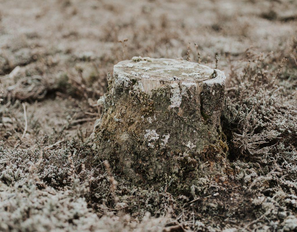 stump on the ground